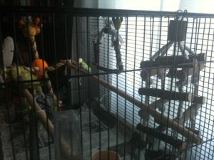 Quelle cage pour Piwi ? Mini_874403photo2