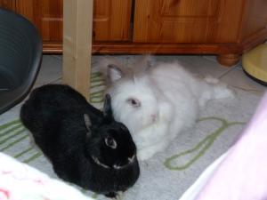 je vous presente Achille et Willow (cohanniversaire Achille p9) - Page 6 Mini_885097P1030757