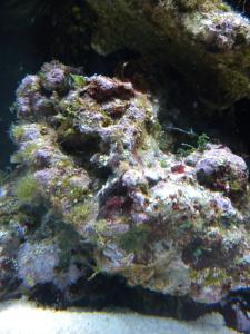 Lancement RED SEA 130D Mini_898668DSCN2376