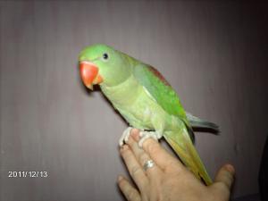 Mon bébé Grand alexandre Ruby !! - Page 3 Mini_905975IMAG0588