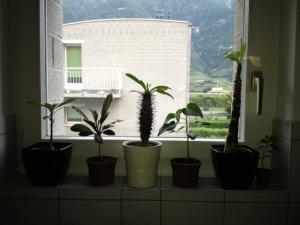 Mes plantes exotiques et tropicales Mini_910875photo1