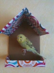 Patron d'une maisonnette en carton Mini_927156511
