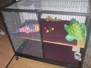choisir une cage Mini_961914DSCF4549