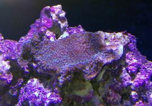 Identification coraux Mini_980221IMG20170303192610