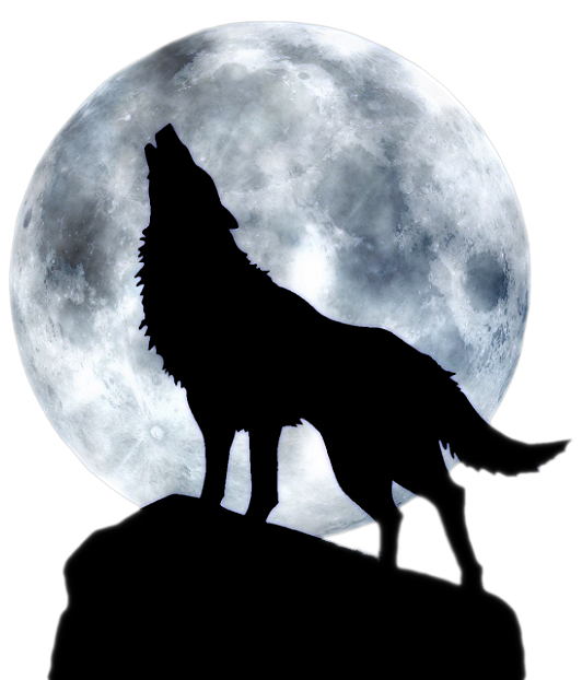 Les loups...... 606192dpa6nlaj