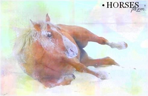 • Horses Farm »