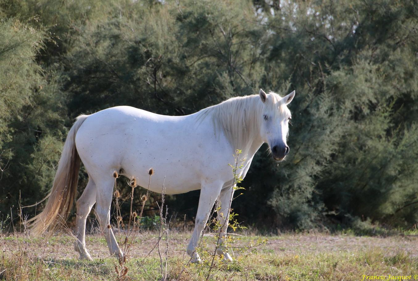 [Fil - Ouvert ] Chevaux - Page 8 111692881