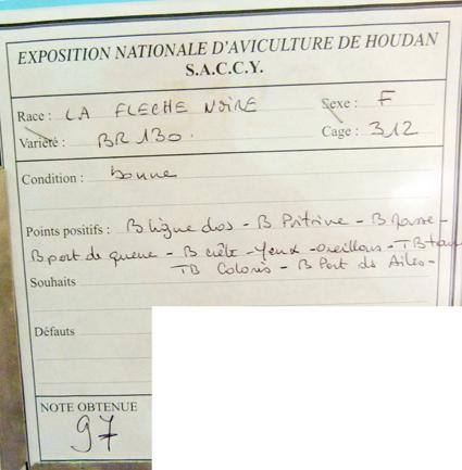 2014 - exposition d'aviculture Foire ST MATTHIEU 27 et 28 Septembre 2014 - Page 2 112065P1150735