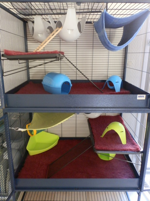 Photos de vos cages - Page 37 113869P8201199