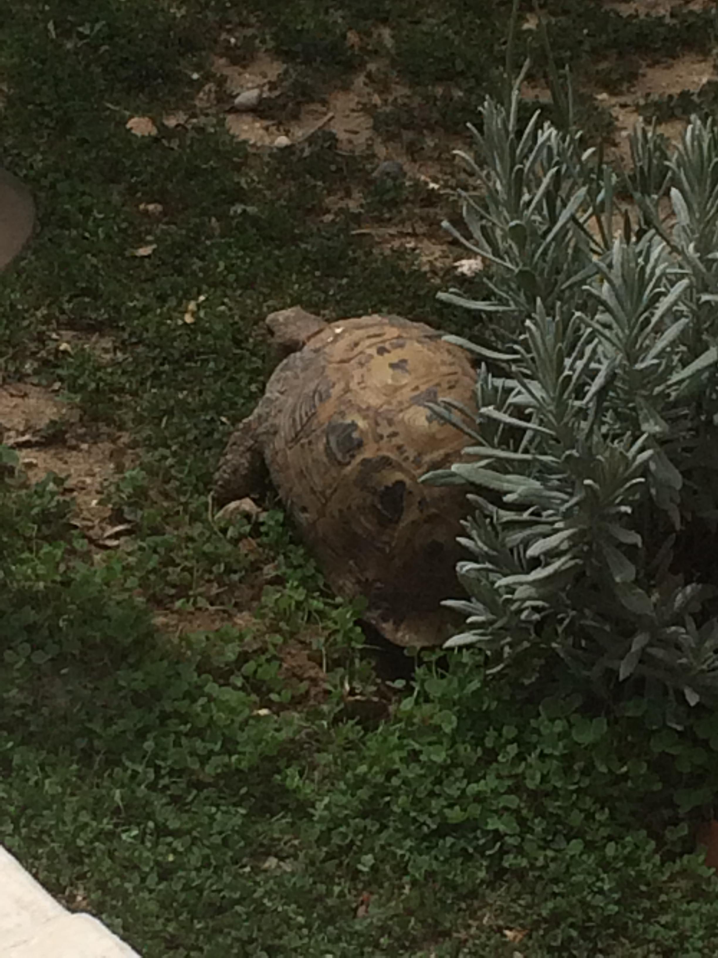 Turtles => Yoshi66 118321photo1