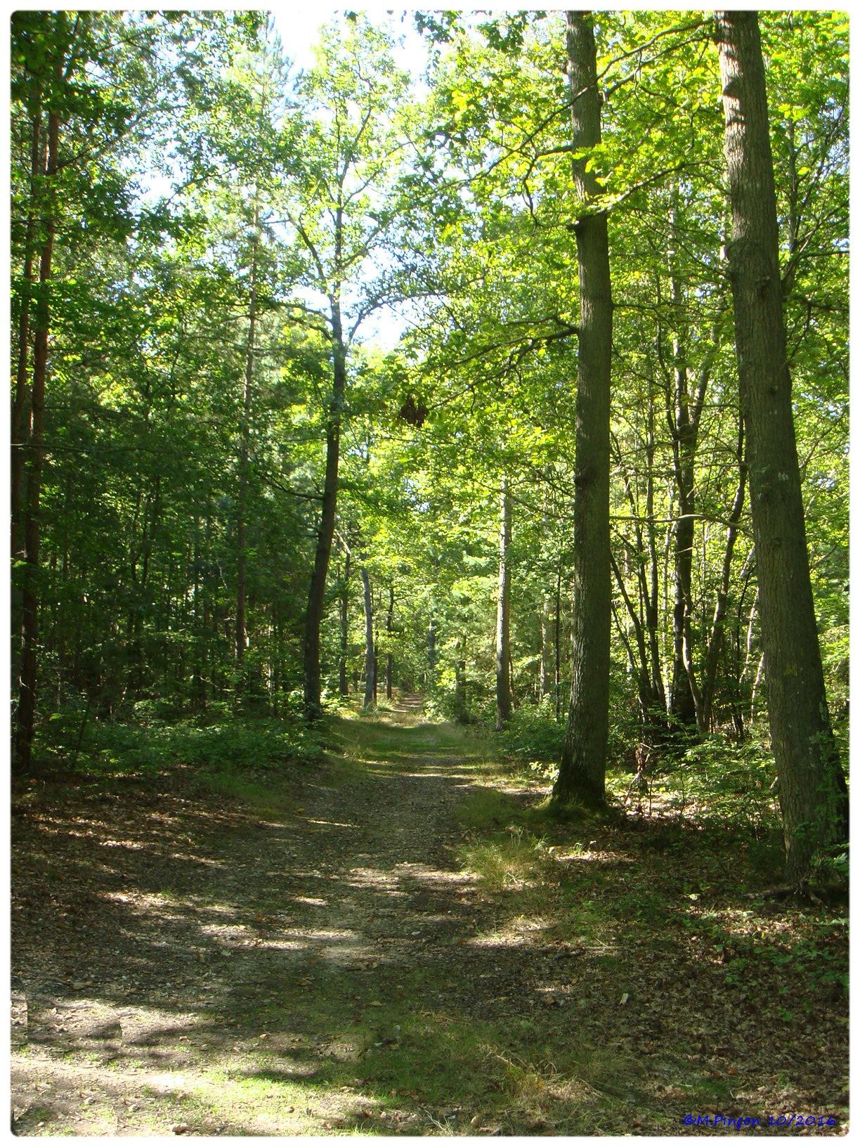 [fil ouvert] la forêt dans tous ses états - Page 6 122201DSC011067