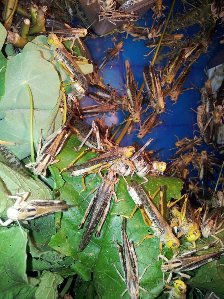 Elevage d'insectes en photos... Pourquoi pas?! 125826743