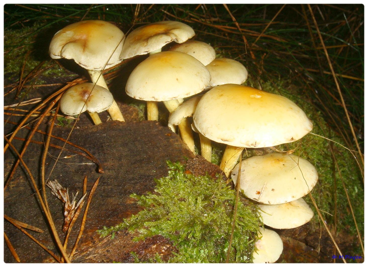 [fil ouvert] les champignons 126802DSC011193