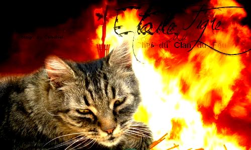 Alliance pour la destruction... [ PV Helen, Étoile Oubliée, et moi, Griffe de Ronce] 127377SignaEtoileduTigre