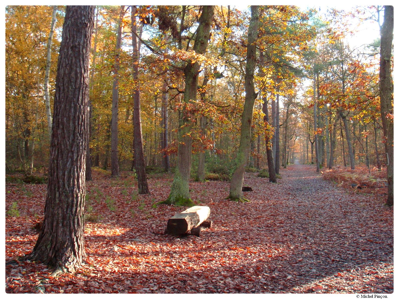 [fil ouvert] la forêt dans tous ses états - Page 17 130804DSC014316