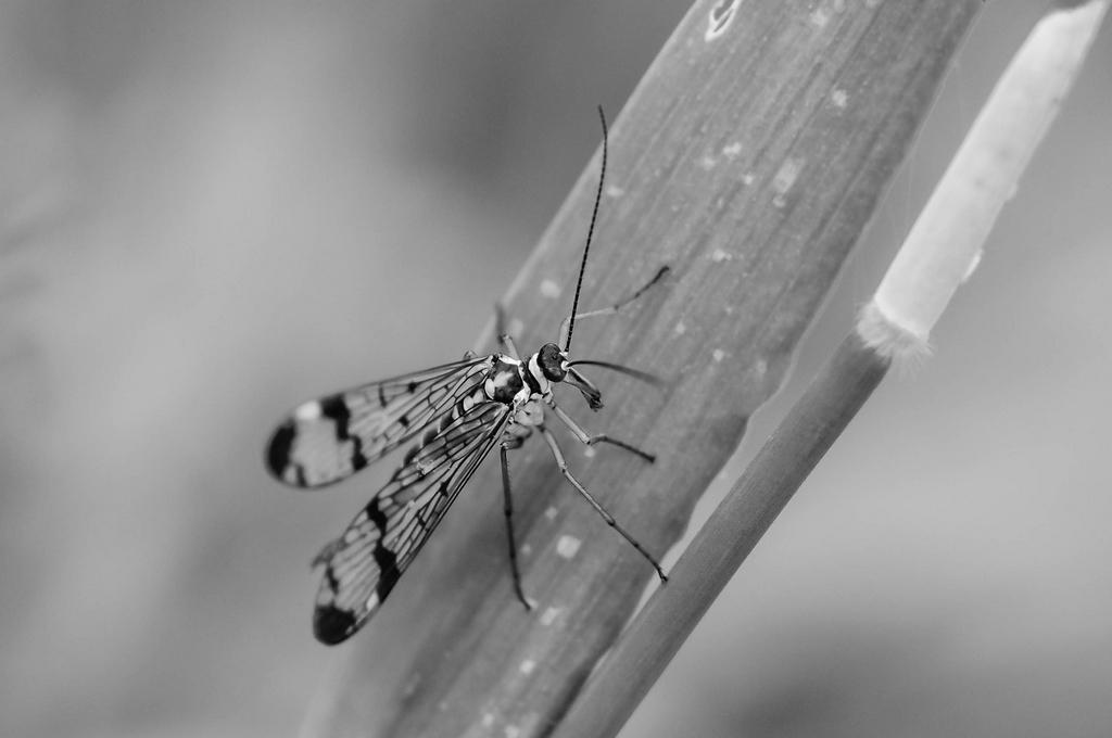 Macros/  proxi/  insectes  - Page 3 131502IMGP35323