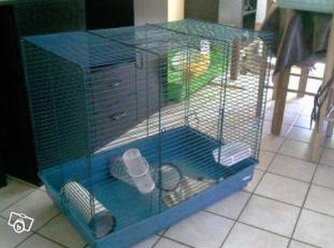 Choix de cage 132797cage1