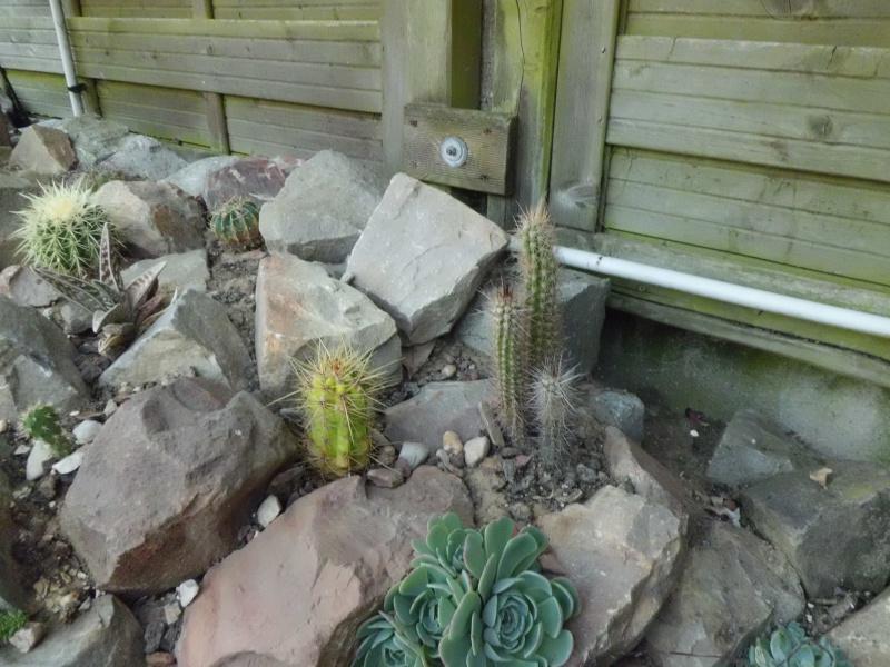 cactus de pô - Page 2 134644CIMG4348