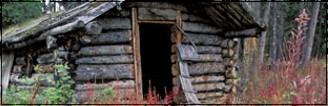 •La nouvelle guerre des clans• 135461canyon10