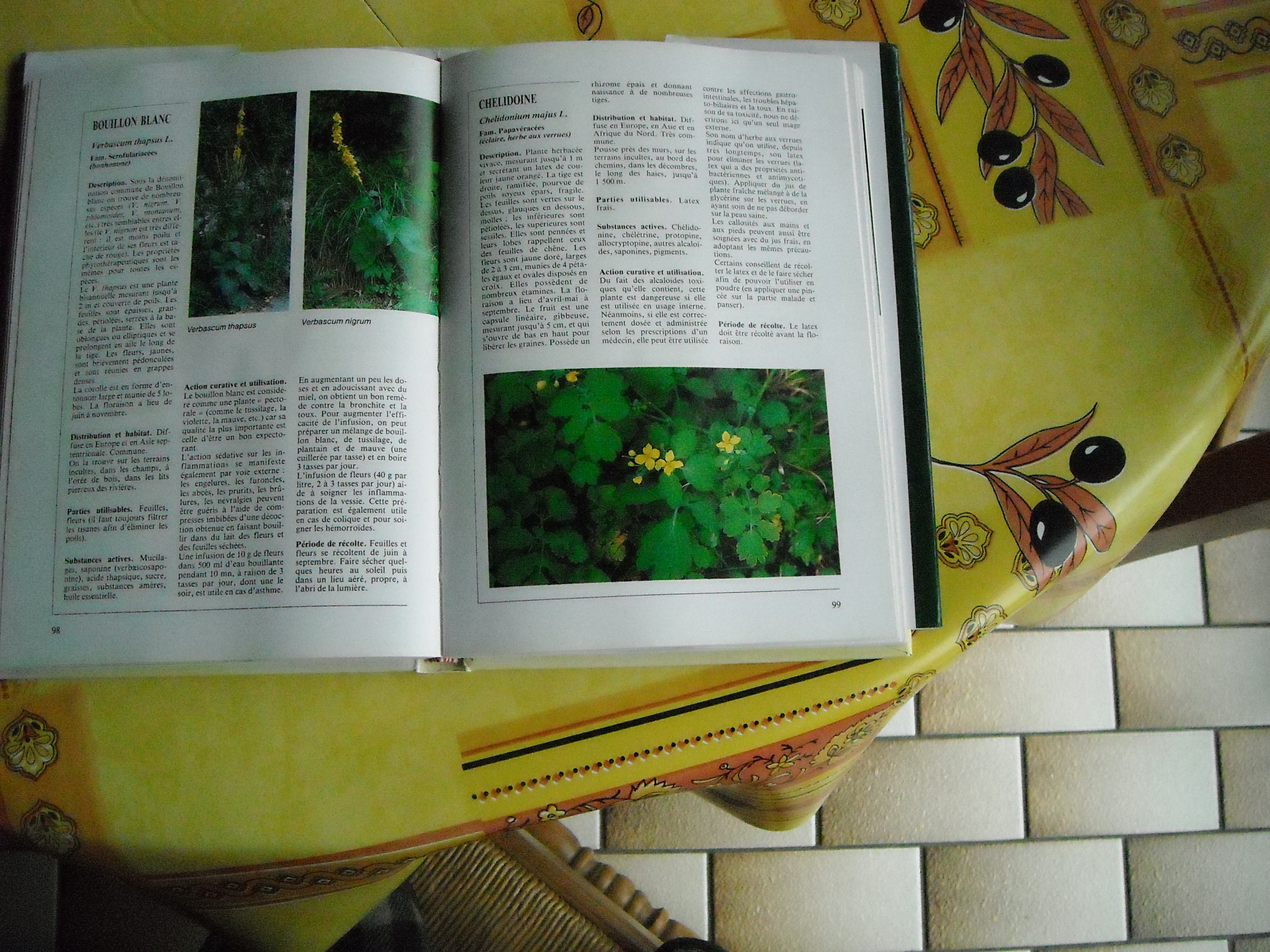 chélidoine ou herbe a verrues 136173001