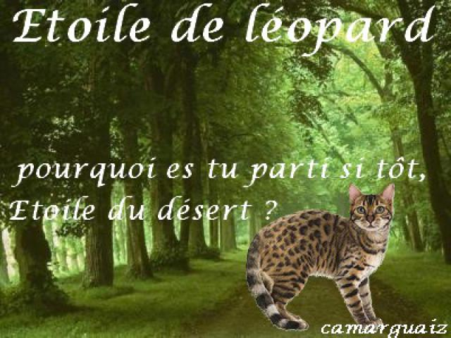 chien ou chat - Page 5 136569signaetoiledelopard