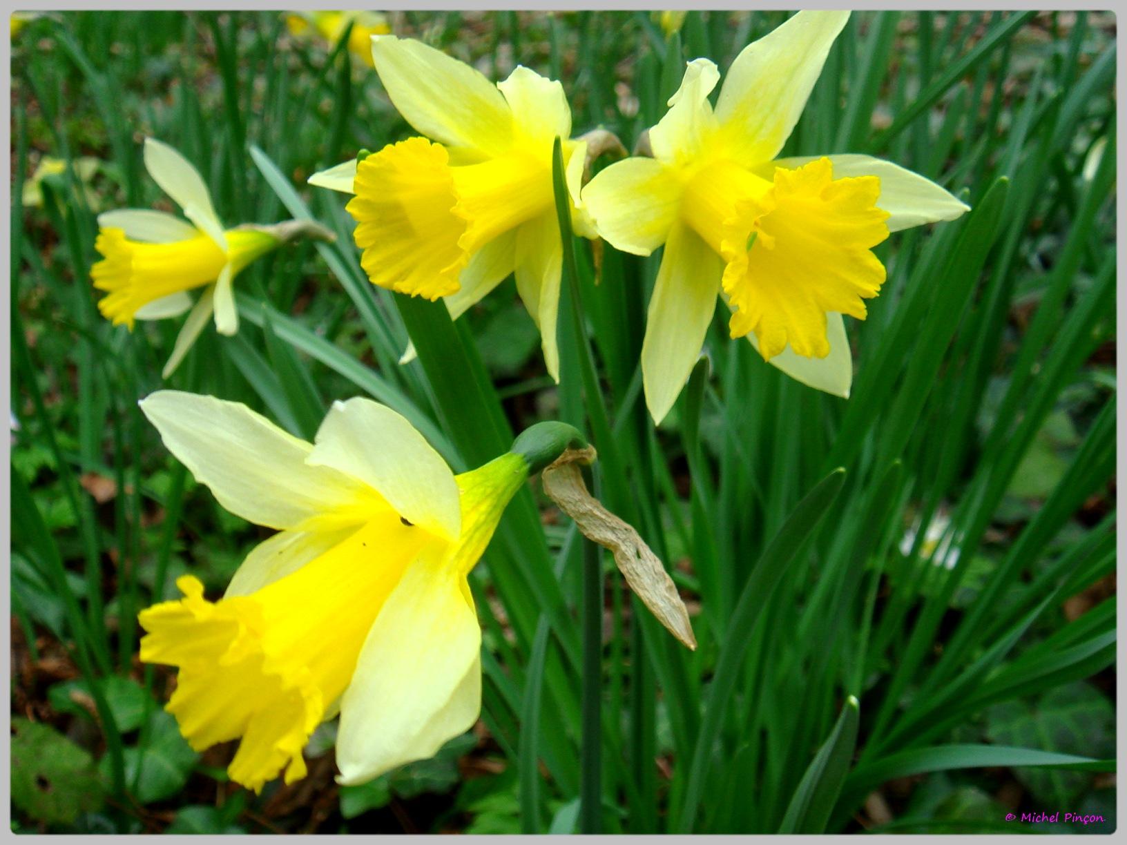 [Fil Ouvert] Fleurs 137086DSC012462