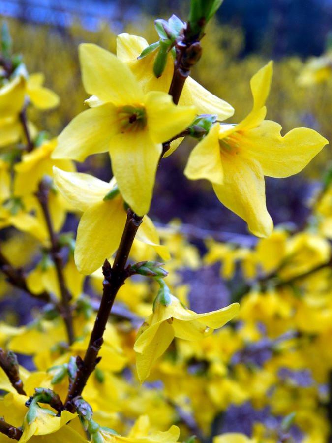 [Fil Ouvert] Fleurs 143930018Copier