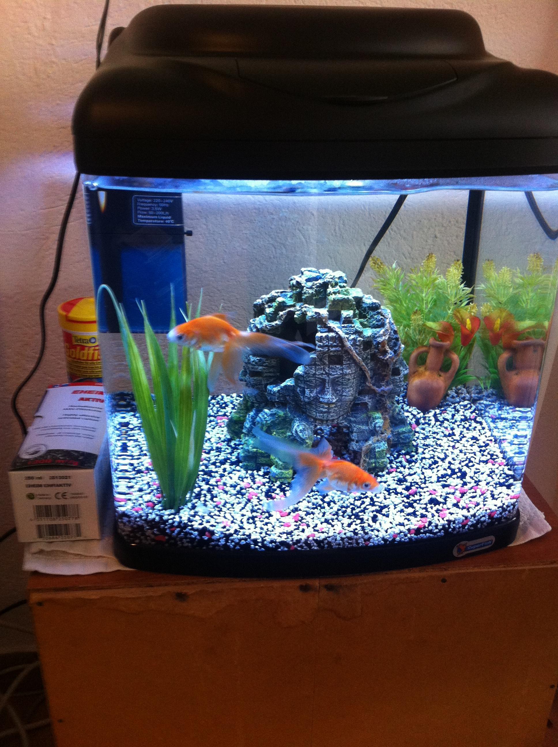 Poisson rouge voile de chine for Aquarium poisson rouge sent mauvais