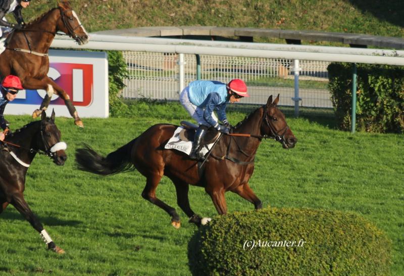 Photos Auteuil 6-11-2016 1539005J6A0619