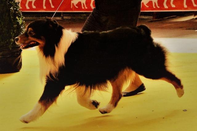 Impact du chien sur la santé humaine - Page 3 156800dustyz