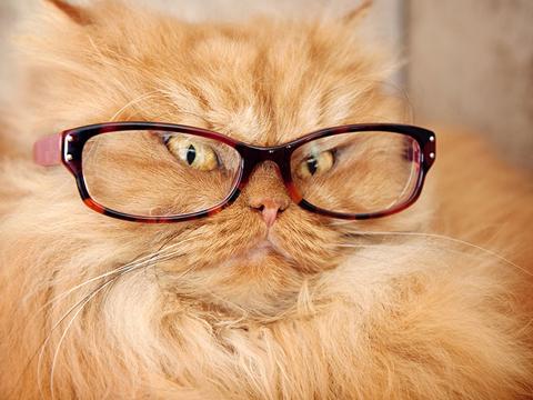 Chat avec des lunettes (new = chat avec des lunettes + un bonnet voir com de bils) 158233chatlunettes04