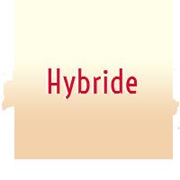 Hybride femelle