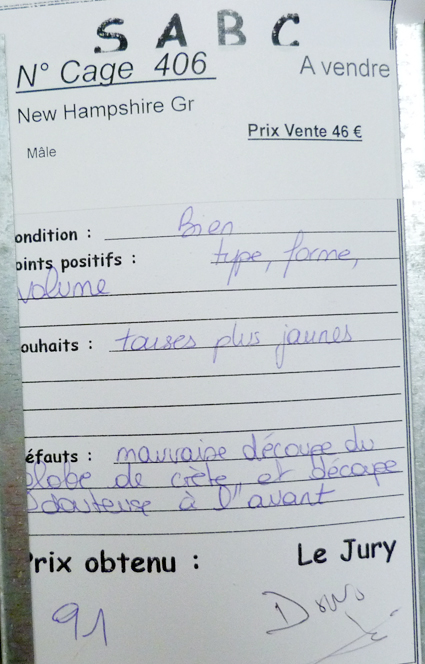 dorking - LUC-SUR-MER (avril 2013) photos des grandes races étrangères 168857P1080950