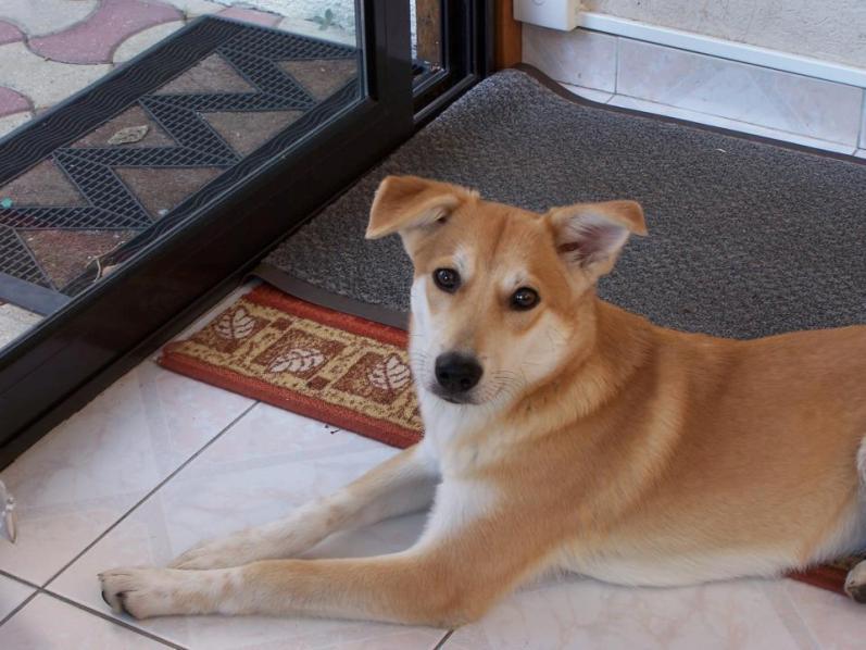 Corie, femelle, 3 mois, joli croisement, très sociable - 7 octobre 2011 - Page 2 16917688G