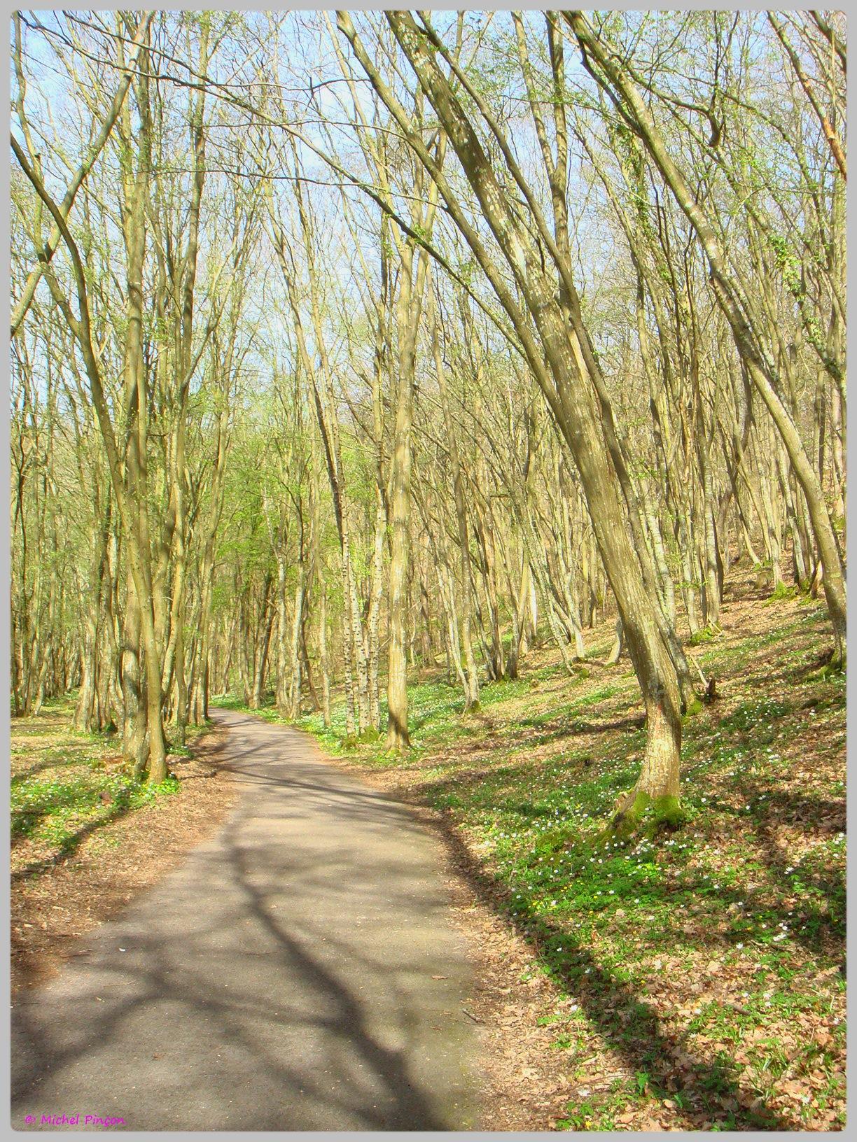 [fil ouvert] la forêt dans tous ses états - Page 13 170596DSC012502