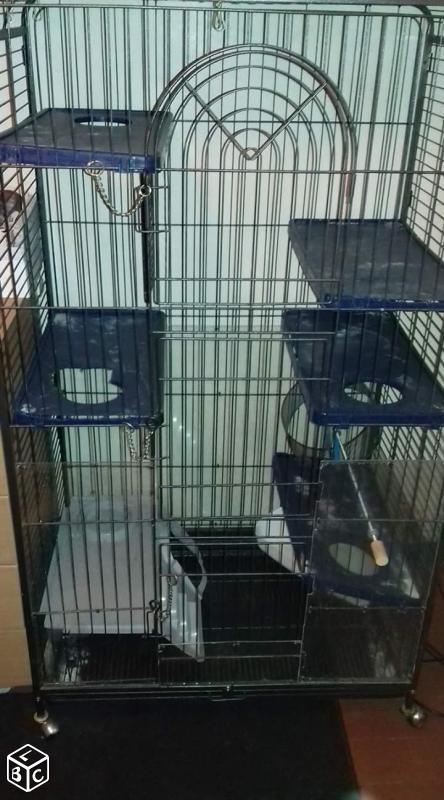 Aménagement nouvelle cage, besoin de vos avis 172629cage