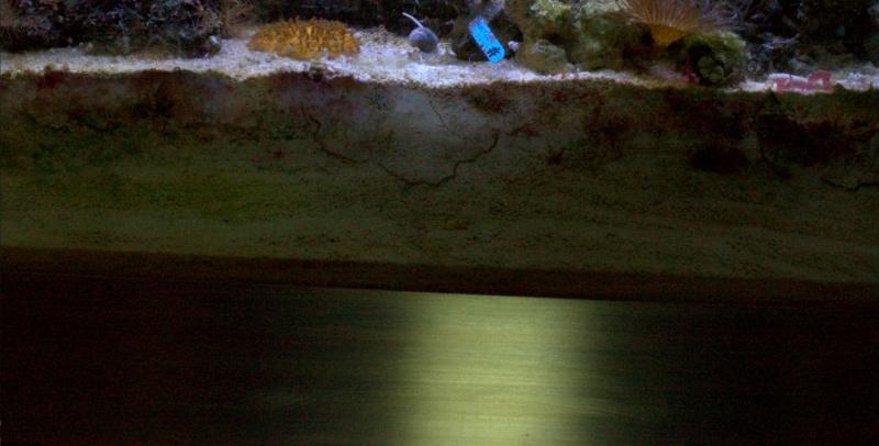 Tâches bleu partie inférieur lit de sable épais. 174778IMGP40834