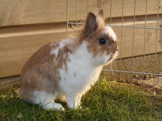 Ma lapine refuse la saillie 183980DSCN0473
