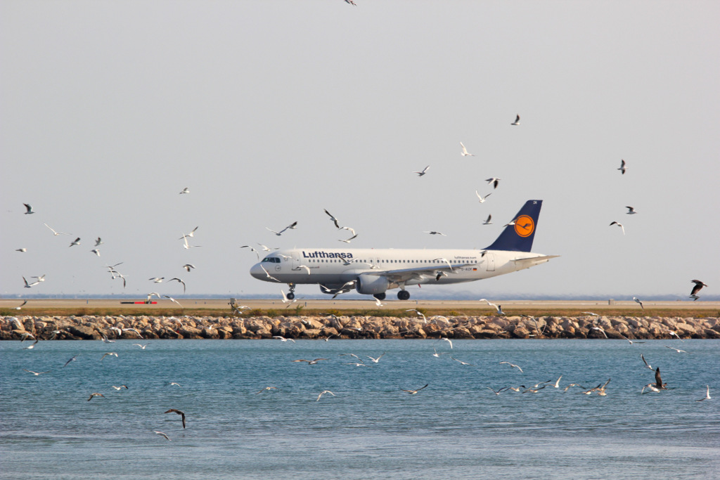 Aéroport de Nice Côte d'Azur , [LFMN-NCE] - Page 6 188163IMG0212