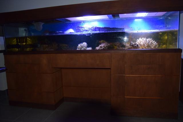 Le nouveau bac du Poissonpané : aquaterrarium de 900L / Nouvelle Calédonie 190553DSC00011