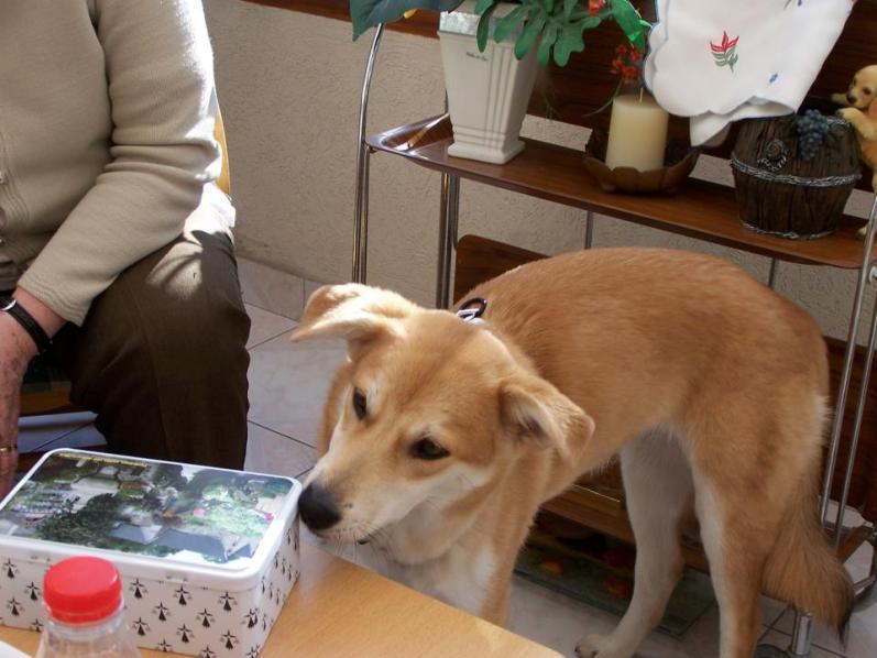 Corie, femelle, 3 mois, joli croisement, très sociable - 7 octobre 2011 - Page 2 19695844F