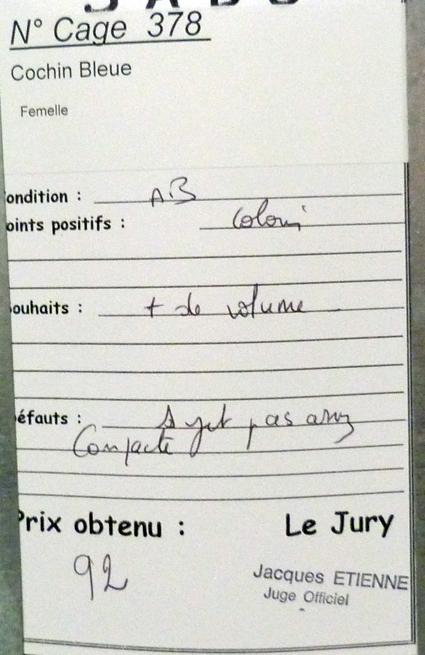 Jersey - LUC-SUR-MER (avril 2013) photos des grandes races étrangères 198428P1090023