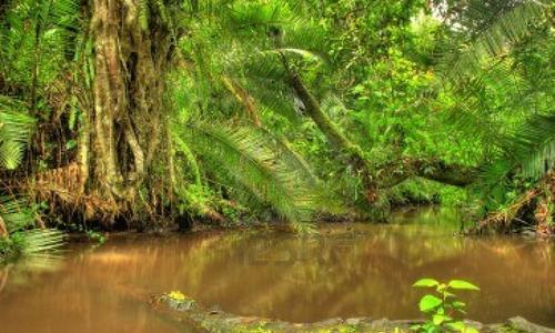 Jungle des Marécages