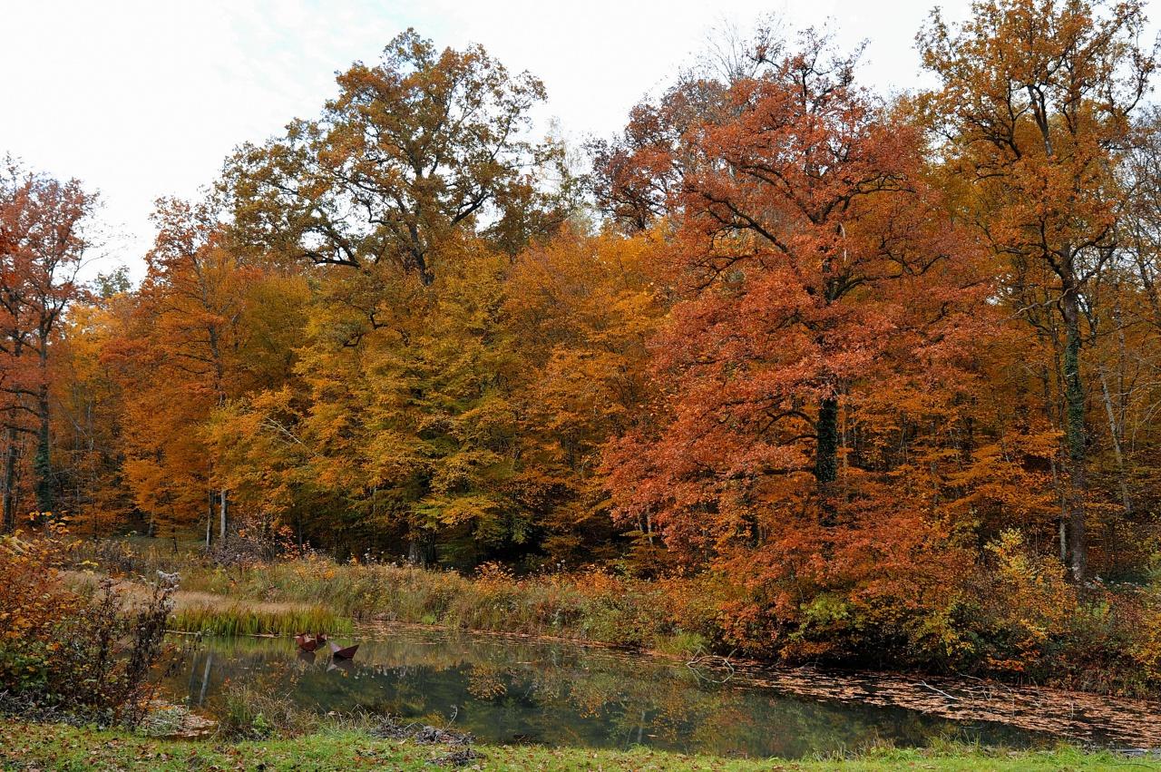 La forêt en couleurs 205284DSC3010