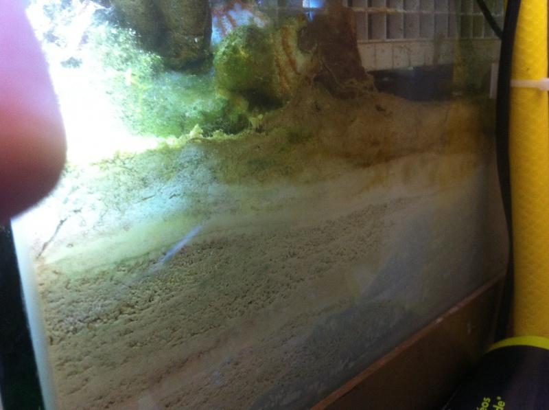 Tâches bleu partie inférieur lit de sable épais. 224515IMG2632