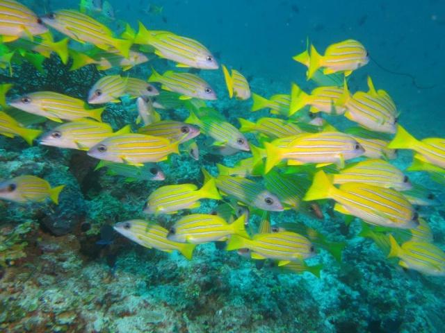 Quelques photos de mes dernières vacances (Maldives) 232810IMG3295