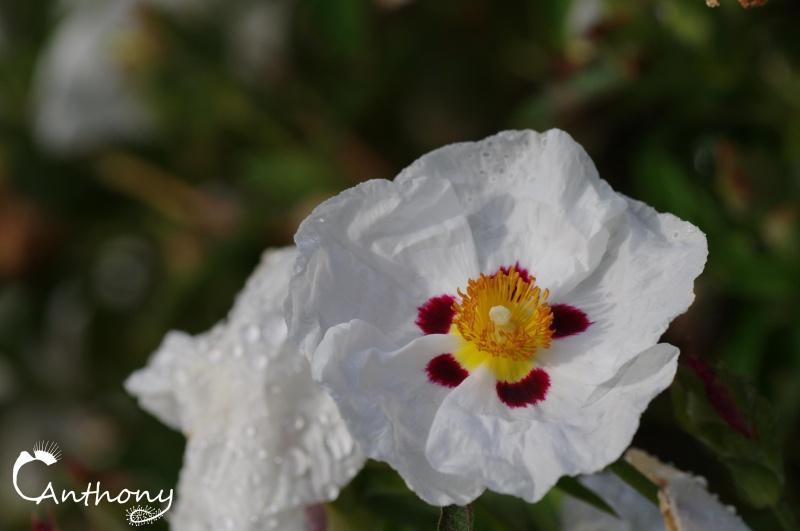 Fleur de graminée 237727IMGP5076