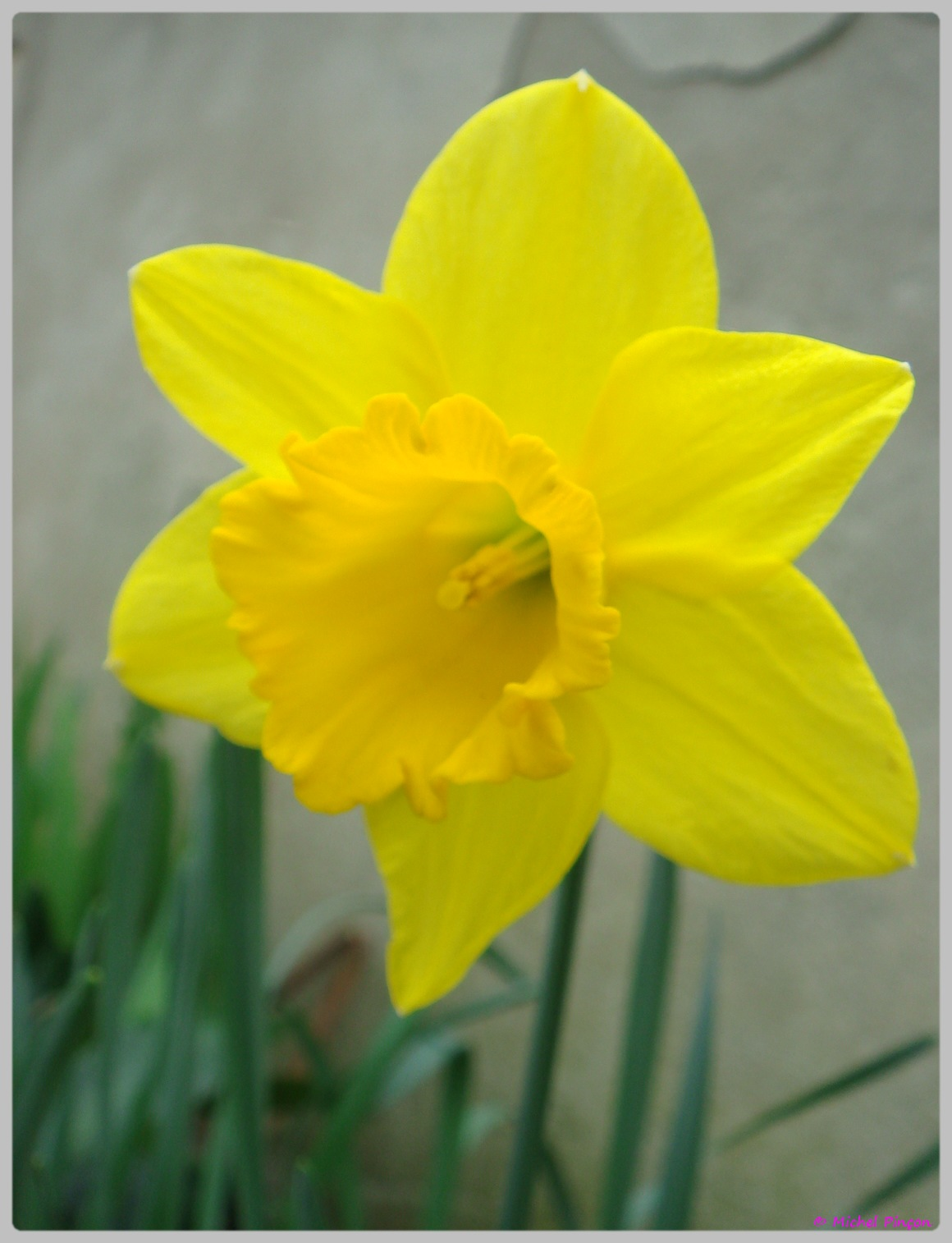 [Fil Ouvert] Fleurs 245717DSC012478