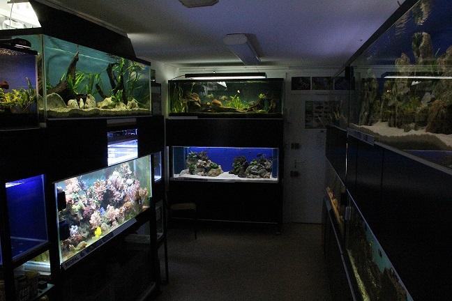 Club aqua de Champ-Le-Boeuf - Portes ouvertes - Sam. 17 mai  245815LocalclubCACLB