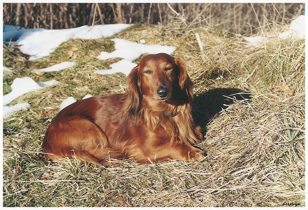 [fil ouvert] Les chiens, nos amis 245902numrisation0116